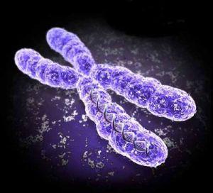 Cromosoma (figuración)