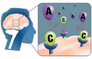 receptor adenosina